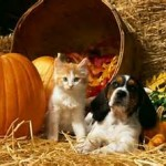 fall cat and dog